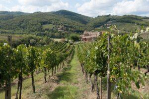 winegrowing-972870_960_720